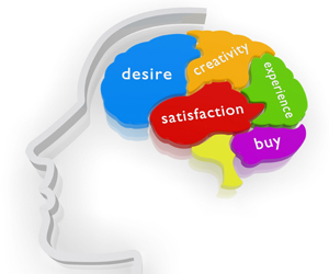 Meet The Most Powerful Decision Maker: The Brain